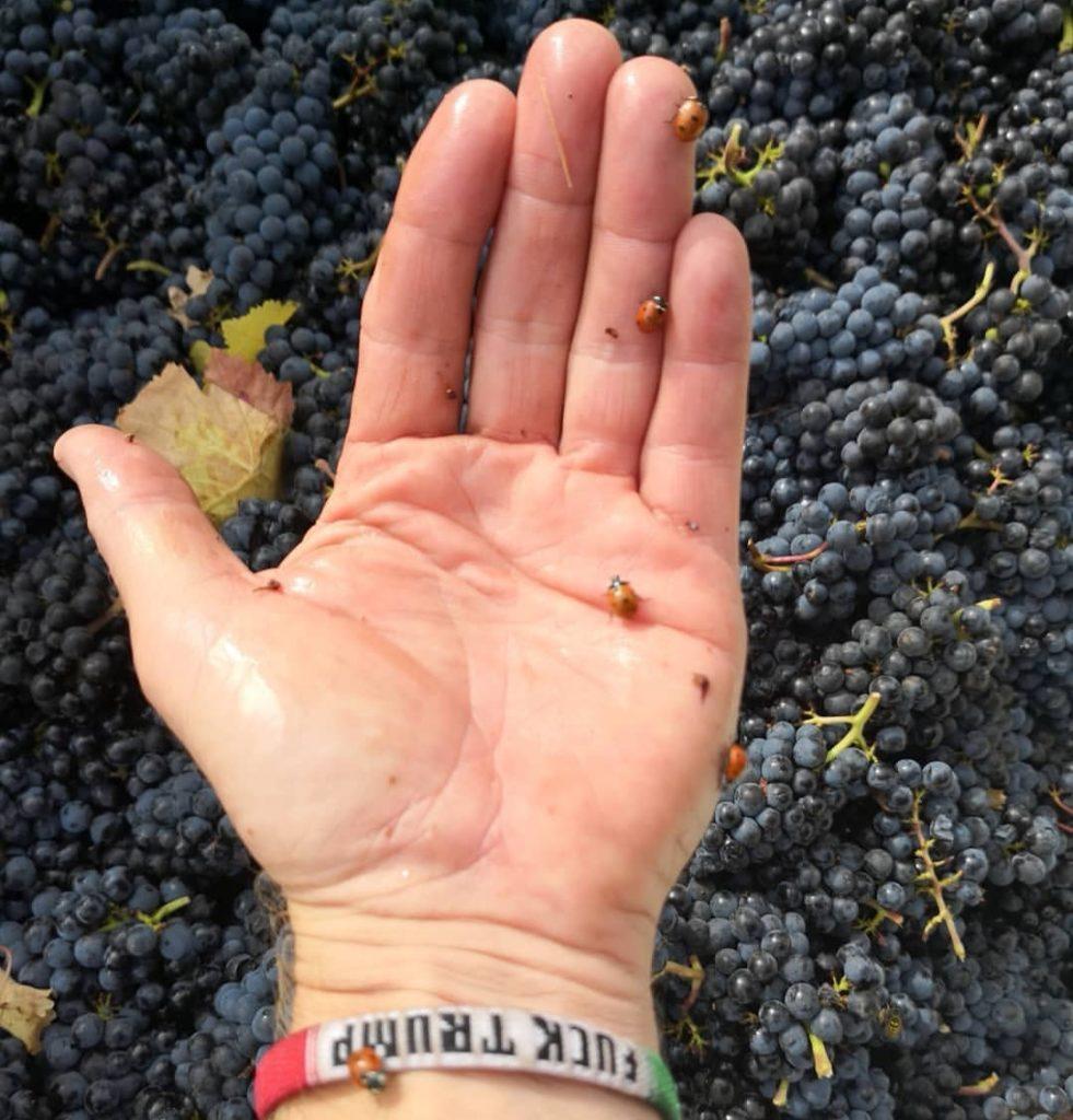 Jean-Marc du Vin Sobre en Oregon