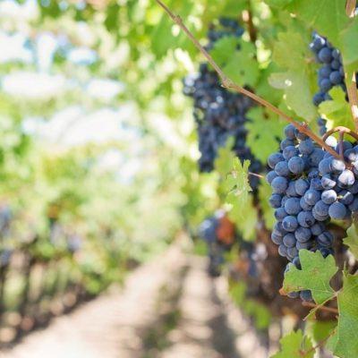 L'Académie du Vin #2 : les grands cépages rouges du Sud au Vin Sobre Prado